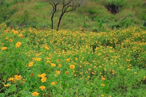 Tháng 11, Đà Lạt mùa của những loài hoa