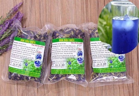 Rộ phong trào trồng hoa đậu biếc chữa bá bệnh, bác sĩ đông y nói gì?