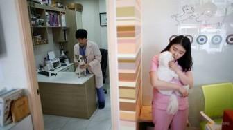 Vì sao vợ chồng trẻ Hàn Quốc chọn nuôi chó chứ không sinh con?