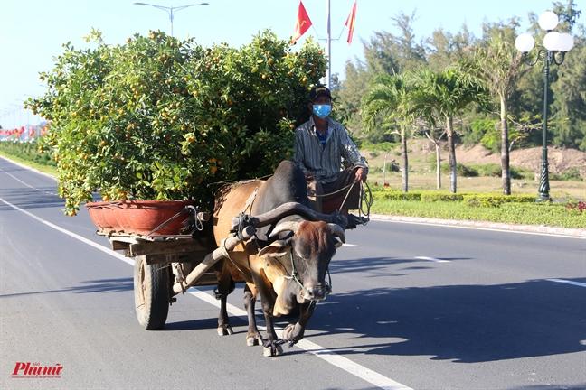 'Check in tet' Phu Yen: Voi va cho cai tet du day