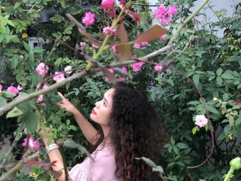Nếu tết chỉ cần hoa thì quanh năm nhà có tết