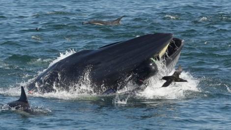 Thoát chết trong gang tấc khi bị cá voi nuốt chửng