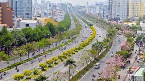 Ngắm mùa hoa nở giữa Sài Gòn