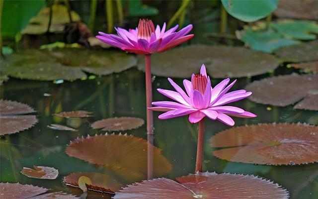 Hoa lac giua dong