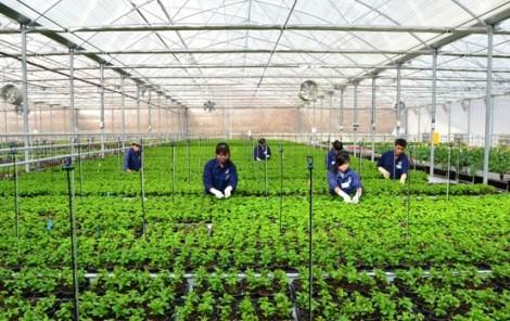 3 tháng đầu năm, sản xuất nông nghiệp TP.HCM đạt gần 5.000 tỷ đồng