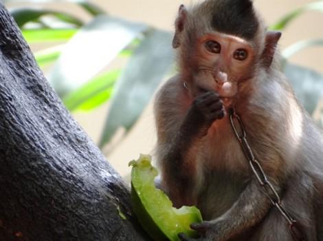 Người giàu ở Sài Gòn giã từ thú vui nuôi dã thú