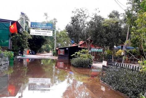 Làng cá sấu Sài Gòn bất ngờ bị ngập