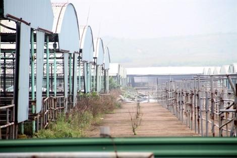 Định giá tài sản dự án chăn bò nghìn tỷ liên quan đến ông Trần Bắc Hà
