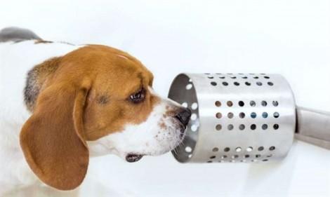 Chó ngửi mùi phát hiện bệnh ung thư
