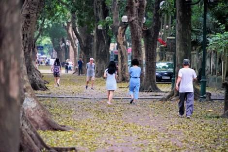 Người Hà Nội chụp ảnh với lá sấu nhuộm vàng phố phường ngày cuối đợt nghỉ lễ