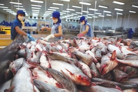 Trung Quốc bắt đầu phát triển nghề nuôi cá tra