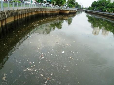 Sau mưa 'giải nhiệt', cá chết lềnh bềnh trên kênh ở Sài Gòn