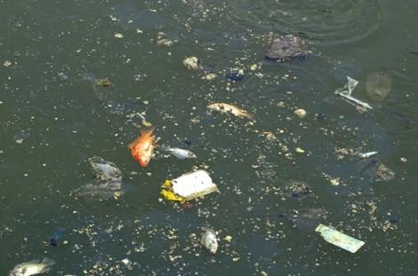 Bốn giải pháp ngăn cá chết ở kênh Nhiêu Lộc - Thị Nghè