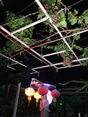 Can canh nhung gian nho lu khu trai tren san thuong Sai Gon
