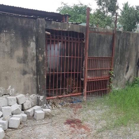 Vụ người đàn ông bị hổ lôi vào chuồng cắn đứt hai tay: Đề nghị thu hồi giấy phép thí điểm nuôi hổ