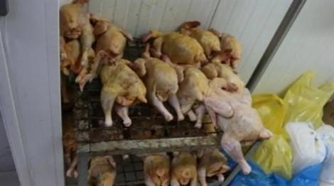 Cảnh sát 78 nước cùng Interpol truy quét thực phẩm bẩn, bắt giữ 672 người