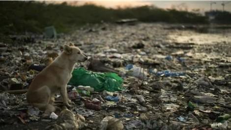 Việt Nam nằm trong nhóm nước chiếm hơn một nửa số chất  thải nhựa trôi ra đại dương