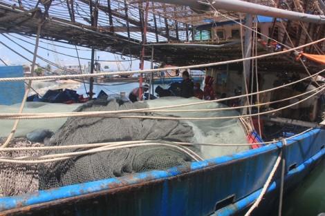 Gần 1.000 tấn mực khô ở Quảng Nam chờ 'giải cứu'