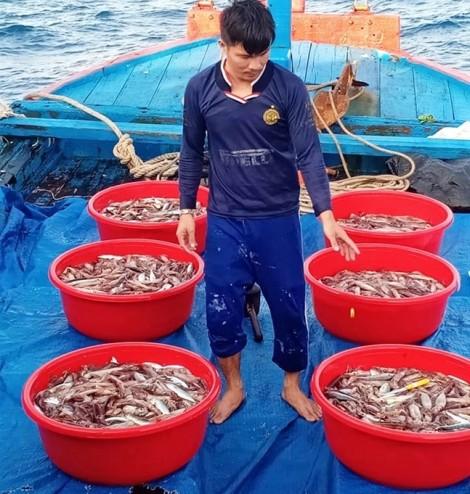 Giá mực quá rẻ, ngư dân phải đổ xuống biển?