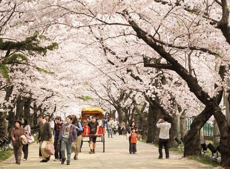Lao động chui sẵn sàng chi 400 triệu cho các Công ty Du lịch để đến Nhật Bản