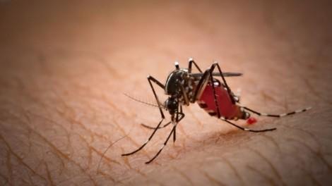 Philippines tuyên bố tình trạng khẩn cấp quốc gia về sốt xuất huyết