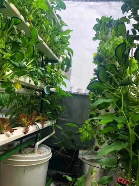 Vườn rau 'ăn không kịp thở' của vợ chồng Ngọc Lan – Thanh Bình