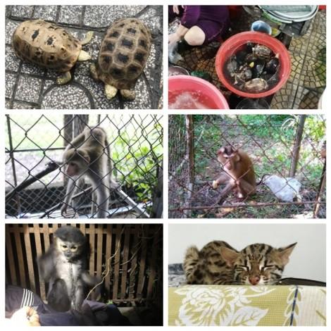 Nhiều loài rùa quý hiếm được rao bán công khai ở Đà Nẵng