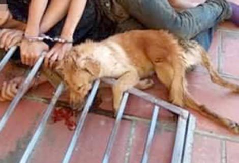 Chở nhau đi trộm chó, cặp tình nhân bị người dân vây bắt