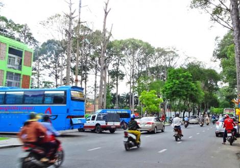 Chuyện Sài Gòn: Cây xanh thì thiếu, chiếu sáng thì lỗi