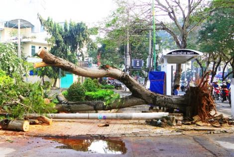 Sài Gòn thành 'đảo nhiệt', cây cũng chết khô