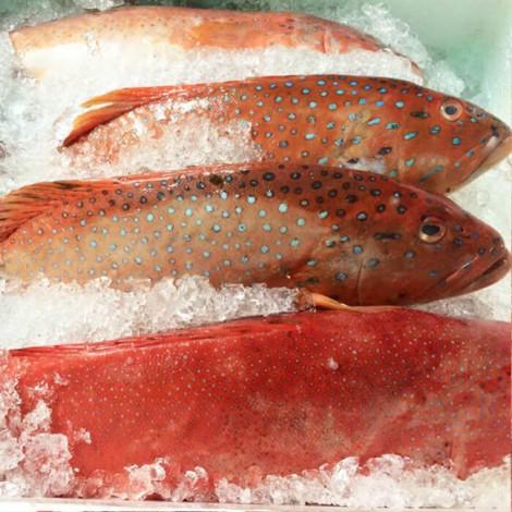 Tại sao bác sĩ khuyên nếu ngán thịt hãy ăn cá mú?