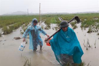 Người dân lũ lượt đội mưa săn chuột đồng