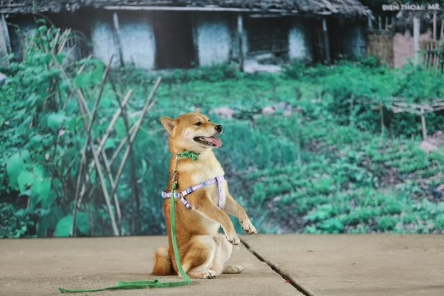 'Nuoi' rau trong 5 thang de lam Lao Hac