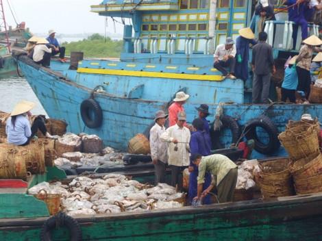 Thẻ vàng IUU khiến hải sản Việt Nam xuất khẩu vào EU giảm mạnh