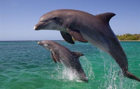 Clip: Hàng chục con cá heo nhảy múa ở biển Cửa Đại