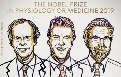 Giải Nobel Y học 2019 trao cho 3 nhà nghiên cứu về cách các tế bào phát hiện oxy