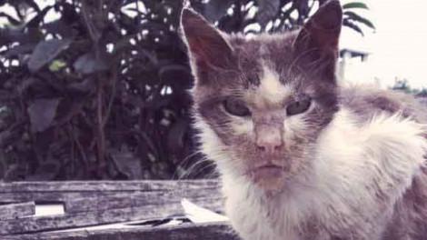Người đàn ông ở Cà Mau tử vong do bệnh dại sau khi bị mèo cắn vào chân