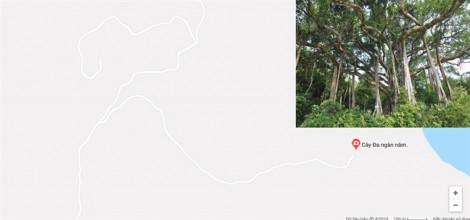 Đà Nẵng sẽ cấm xe tay ga lên bán đảo Sơn Trà