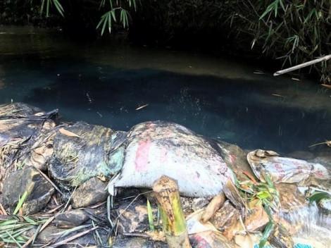 Thủ tướng yêu cầu Bộ Công an khẩn trương điều tra vụ nước sạch sông Đà nhiễm dầu thải