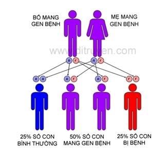 Nhom nguoi nao o Viet Nam mang gen Thalassemia cao nhat ca nuoc?