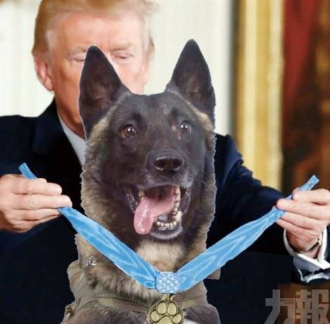 Ông Trump bị phê phán vì đăng ảnh chế tặng huy chương cho chó