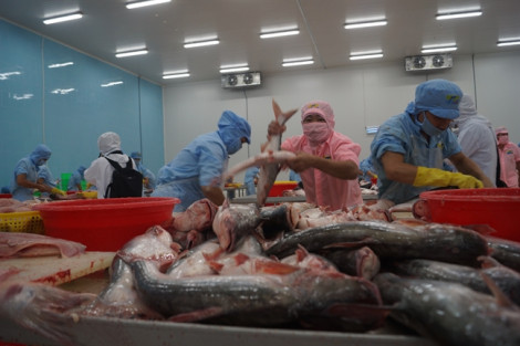 Mỹ công nhận hệ thống kiểm soát an toàn  thực phẩm cá da trơn của Việt Nam