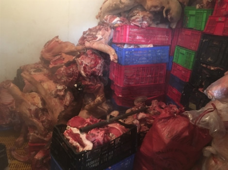 Triệt phá đường dây kinh doanh thịt heo thối, heo nhiễm bệnh tả heo châu Phi