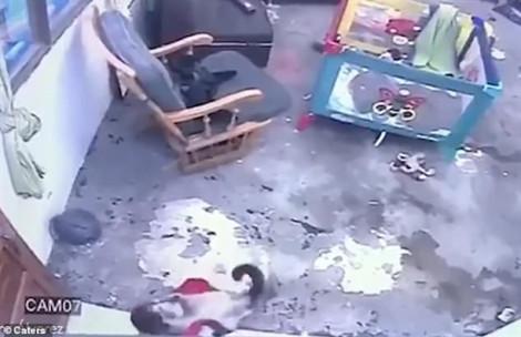 Bé 1 tuổi thoát hiểm trong gang tấc nhờ cô mèo Xiêm thông minh