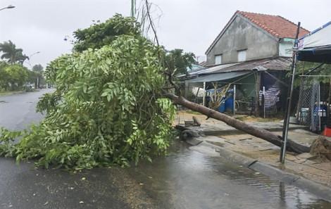 Bão số 6 suy yếu, gió mạnh quật ngã cây cối tại Phú Yên