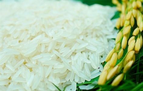 Gạo Việt Nam lần đầu nhận giải gạo ngon nhất thế giới