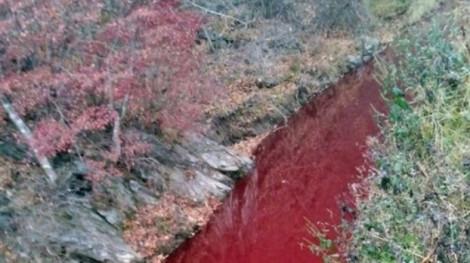 Một con sông Hàn Quốc chuyển sang màu đỏ vì máu heo