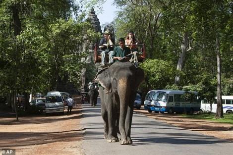 Campuchia cấm du lịch cưỡi voi tại khu di tích Angkor