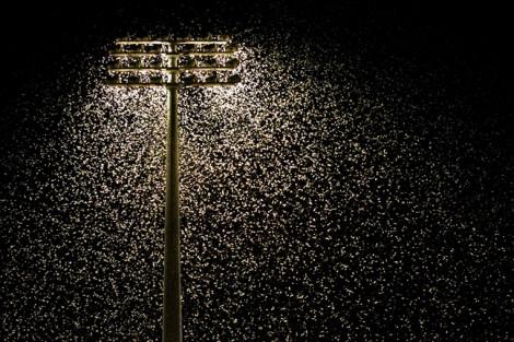'Ô nhiễm ánh sáng' là nguyên nhân chính đẩy côn trùng đến 'ngày tận thế'