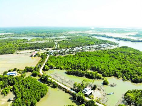 Những bất thường trong vụ  loại bỏ 73ha rừng Cần Giờ